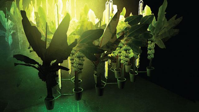 Urbanana, vertical farming