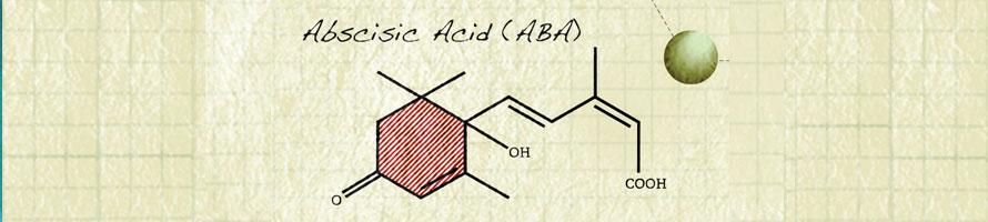 Growth hormones, Abscisic Acid, hydroponics
