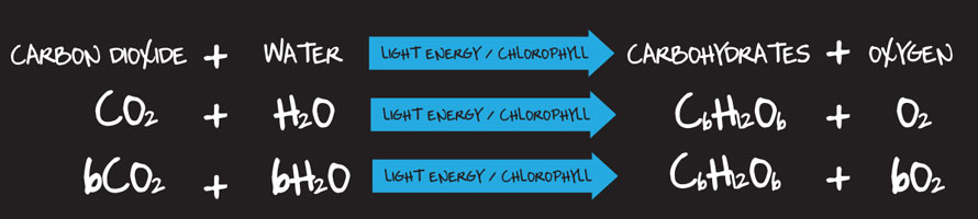 photosynthetic light spectrum, photosynthesis, measuring light, Hydromag, hydroponics