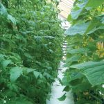 AquaGarden, aquaponics, horticulture, education