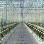 Thanet Earth Britians largest commercial hydroponics facility