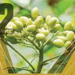 Neem Oil, organic pest control