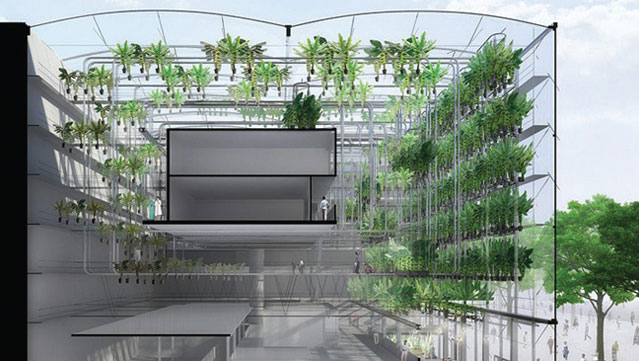 Urbanana, vertical farming