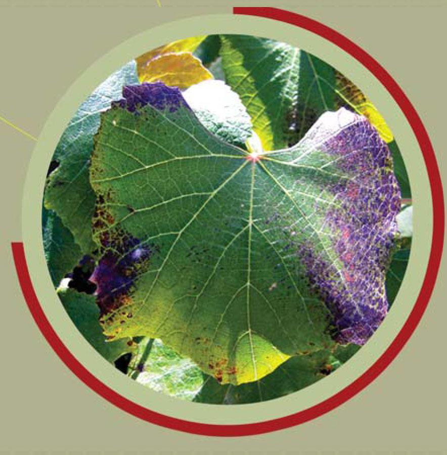NPK, Phosphorous deficiency, macro nutrients, plant nutrition