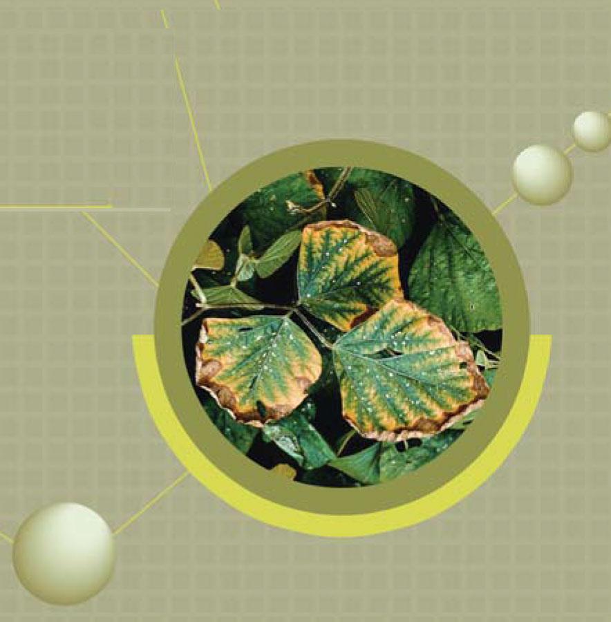 NPK, potassium deficiency, macro nutrients, plant nutrition